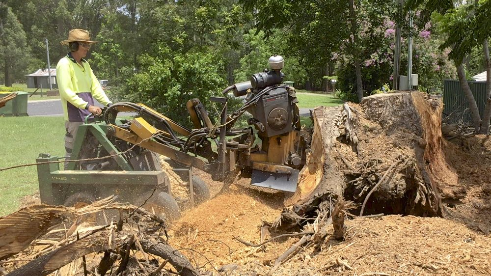 Large gum root ball stump grinding
