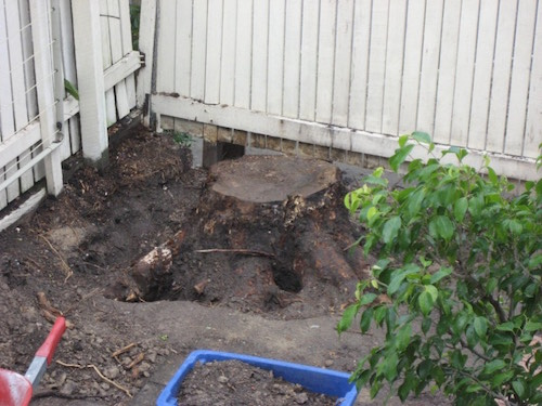 Stump Attempted to be dug out