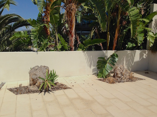 Dracaena stumps surrounded by delicate tiles which needed a portable machine.
