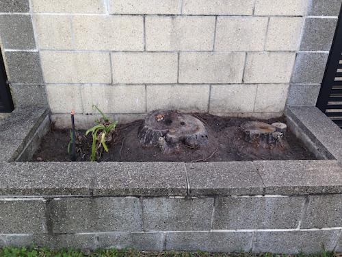 Palm stumps in Brisbane planter box