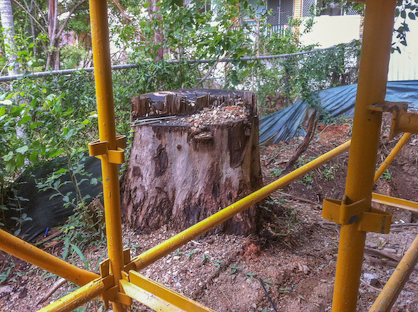 Brisbane tree stump next to scaffolding