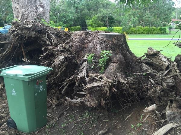 tree rootball grind
