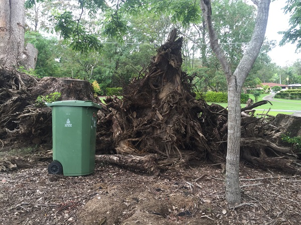 tree rootball in brisbane