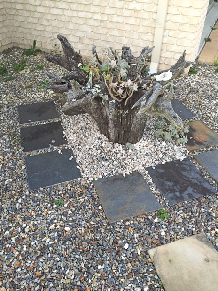 Dracena stump with garden stones