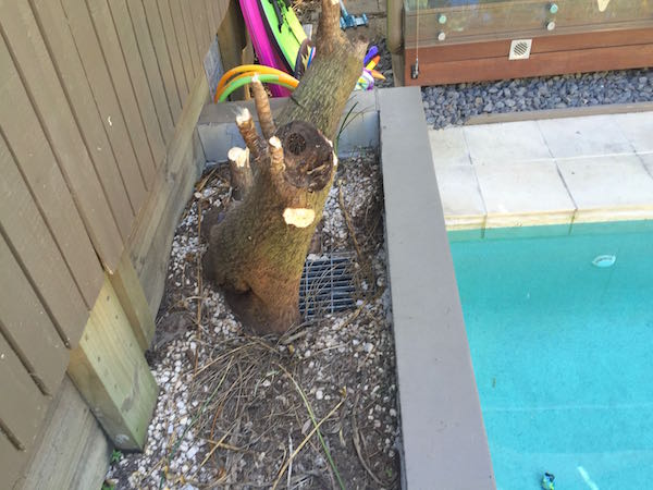 Difficult access for stump grinder beside pool