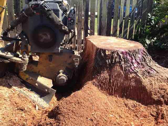 Brisbane Tree Stump